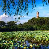 De vijverlandschap van Lotus Stock Fotografie