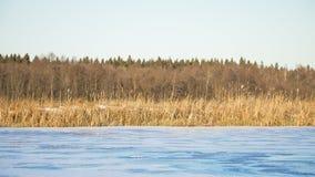 De vijvermeer van het de herfstlandschap Royalty-vrije Stock Foto