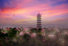 De vijverzonsondergang van Lotus Stock Foto's