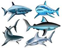 De vin kraakbeenachtige tanden van haaivissen Stock Foto's