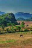 De Vinales Vallei, Cuba stock foto
