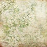 De vintage de fond blanc grunge 144 de vert doucement Photographie stock libre de droits