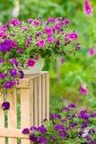 De violette bloem van de tuin in potten bevindend krat Stock Foto