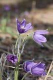De violette bloemen van Nice royalty-vrije stock fotografie
