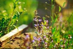 De violette en donkerblauwe bloemen en het groene gras, de zomer, vakantie, ontspannen, tuin Stock Afbeeldingen