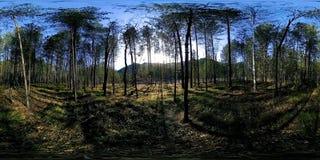 360 de virtuele werkelijkheid van VR van wilde bergen, pijnboombos en rivierstromen Nationale park, weide en zonstralen stock footage