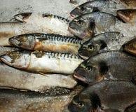 De vis, dorado, makreel, snoekentoppositie op de vissenmarkt ligt op ijs stock afbeeldingen