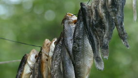 De vis is droog op een kabel stock footage