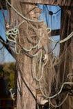 De visnetten hangen van dok die opstapelen zich te drogen royalty-vrije stock afbeelding