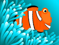 De vissen die van de clown in anemonen verbergen Stock Foto
