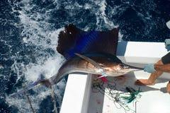 De Vissen die van het zeil uit komen Royalty-vrije Stock Foto's