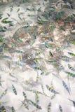 De vissen en de steen van het koraal Royalty-vrije Stock Foto's