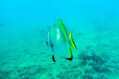 De vissen in het blauwe overzees zwemmen vrij royalty-vrije stock foto's