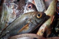 De vissen hielden met ijs vers alvorens te koken Stock Afbeeldingen
