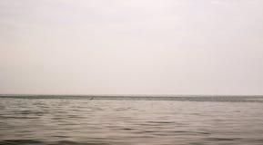 De vissen sprongen uit het overzees in de afstand stock afbeeldingen