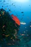De vissen steken aan Stock Foto's