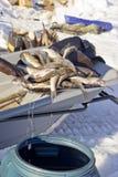 De vissen trekken van het vat stock foto's