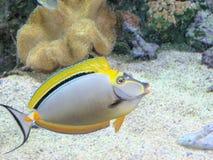 De vissen van Acquarium Royalty-vrije Stock Afbeeldingen