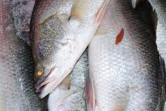 De vissen van Barramundi voor het koken Royalty-vrije Stock Afbeeldingen