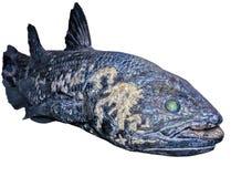 De vissen van Coelacanth Stock Afbeelding