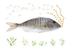 De Vissen van de bel royalty-vrije stock foto's