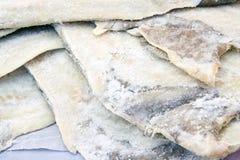 De vissen van de kabeljauw Stock Foto's
