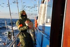 De vissen van de kabeljauw - motorboot op Oostzee Stock Afbeeldingen