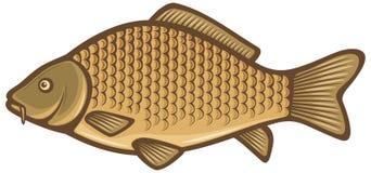 De vissen van de karper Stock Afbeelding