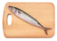 De Vissen van de makreel Stock Foto's