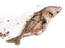 De Vissen van de makreel die herzien helft-lengte zijn stock fotografie