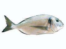 De Vissen van de overzeese Brasem Royalty-vrije Stock Foto