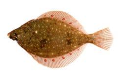 De Vissen van de schol die op Wit worden geïsoleerde Royalty-vrije Stock Afbeeldingen