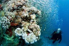De vissen van de scuba-duiker en van het glas stock foto