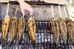 De vissen van de Snakeheadgrill Royalty-vrije Stock Foto's