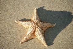 De vissen van de ster Stock Afbeeldingen