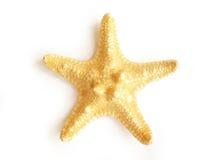 De vissen van de ster Stock Foto's