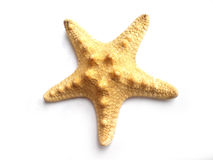 De vissen van de ster stock afbeelding