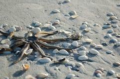 De vissen van de ster op het zand Stock Foto