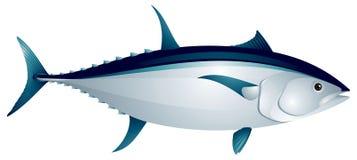 De vissen van de tonijn vector illustratie
