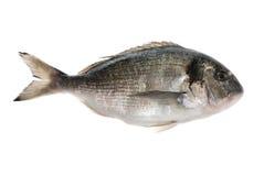 De vissen van Dorada Royalty-vrije Stock Afbeelding