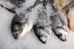 De vissen van Dorado Royalty-vrije Stock Foto
