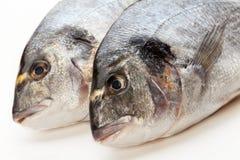 De vissen van Dorado Royalty-vrije Stock Afbeelding