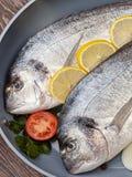 De vissen van Dorado Royalty-vrije Stock Fotografie