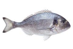 De vissen van Dorado Stock Foto