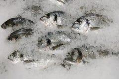 De vissen van Dorado op ijs verse sparusvissen op ijs hoogste mening royalty-vrije stock foto