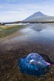 De vissen van Elly van GJelly (Portugese Manowar) Royalty-vrije Stock Foto's