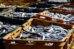 De vissen van Ftrsh stock foto's
