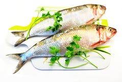 De vissen van haringen Stock Afbeeldingen