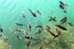 De vissen van Hawaï Royalty-vrije Stock Foto's