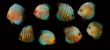 De vissen van het aquarium Royalty-vrije Stock Afbeelding
